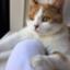 id:cat_lamune