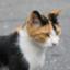 catdeer