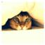 catlovex2