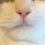 id:catmuzzle