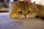 id:catrader
