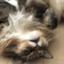 cats38