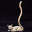 catsblanket