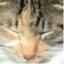 id:catteel