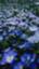 id:cava-po-09