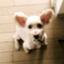 id:chazenyoga