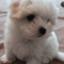 id:cheesedogstar