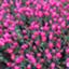id:cherryblossomsfeb