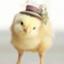 chick24