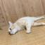 chika_chi