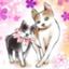 id:chima_taki