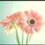 chiroru_memo