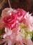 id:chisuke_mt