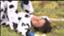 id:choco_sy