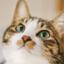 id:coffee-cat