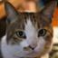 complex_cat