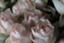 id:corsage515
