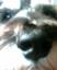 id:coruja
