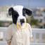 id:cow-boy25