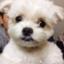 cpz_suzuki