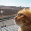 crispycat