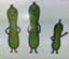 cucumberking231
