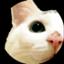 dai5ro-cat