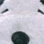 daibuoita