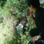 id:dento_kigyo