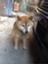 id:dog___ear