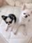 id:doglovers