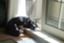 dogpalette40
