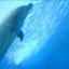 dolphincoco