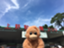 id:doubutsu_chin