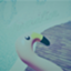duckblue