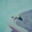 id:duckblue
