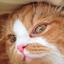 id:e-ichi_hope
