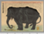 elephant1974