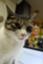 id:everythingbutcats