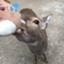 id:exolerry