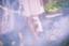 fairy_mintia
