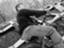 id:fatbike