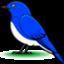 fbird14