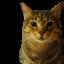 id:felinae