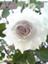 id:fleurette