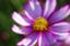 id:flower-flower-flower