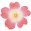 flower_h_m87