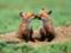 fox_f-x
