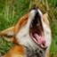 id:fox_game