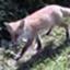 id:foxcafelate